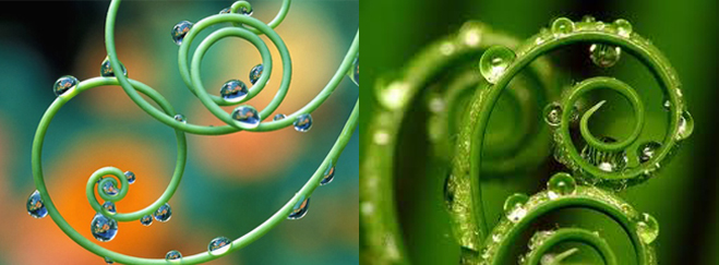 Spiral With Dew / Shuitema